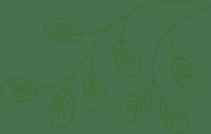 leaf-branch-green-300